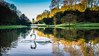 Swan Lake - Fountains Abbey (ianbrodie1) Tags: swan lake fountains abbey north yorkshire national trust trees water reflection bird beautiful calm still ripples outdoors nature history