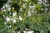 Rettichblüte 1 (tama*) Tags: mai blüten wildpflanze