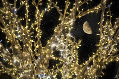 Shining bright (Alessandro Giorgi Art Photography) Tags: shining bright christmas lights moon luna decorations decorazioni scintillante splendente luminoso natale santaclaus sky cielo stars stelle luci nikon d7000 colors colori colored night notte nightscape