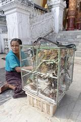 Waiting to free the birds, Shwedagon, Yangon, Myanmar (Yekkes) Tags: asia myanmar burma yangon rangoon shwedagon travel city woman vendor buddhism religion faith birds release freedom free cage