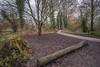 Goodbye 2016 (dave:w:) Tags: december fe1635z aquadrome hertfordshire uk nature path walk tree new years eve