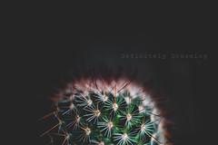 Simply Spiky (Janet_Broughton) Tags: cactus spikey prickles plant macro simple