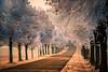 Allee (Sascha Wolf) Tags: alleenstrase allee bäume strase winter frost morgensonne raureif reif kalt
