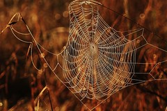 Londolozi Spider Web (Susan Roehl) Tags: southafrica2015 londolozigamereserve southafrica earlymorning spiderweb sueroehl photographictours panasonic lumixdmcgh4 100300mmlens enhanced cropped ngc