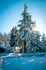 Sequoia in The Hood (Mule67) Tags: redwood 2017 tree snow cold temperature record sunlight