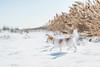2-52-2017 Lily (Jackie Petersen) Tags: bearriverbirdrefuge lilydog 52 weeks for dogs 52weeksfordogs