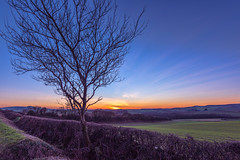 Winter Blues Sunset (Simon Downham) Tags: dsc66364 winter 2017 january isleofwight bare tree sky hedge hedgerow row dew frost rural land scape blue hour golden twilight sunset sun down