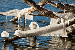 Winter, Lakeside 3 (LongInt57) Tags: ice icicles hanging tree branches water lake cold freezing frozen winter white clear transparent translucent blue grey gry brown nature season kelowna bc canada okanagan