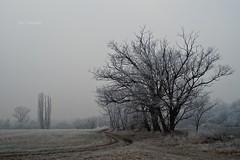 Januári zúzmara 1 (feny-kepesseg) Tags: january winter hoarfrost frost január zúzmara tél fagy