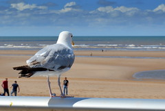 Waiting for food in Blackpool (Tony Worrall) Tags: county uk wild england seagulls english beach birds town tour place northwest gulls country north visit location tony lancashire resort coastal shore sit area perch wait northern blackpool flyingrats lancs fylde fyldecoast worrall welovethenorth 2015 2015tonyworrall