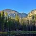 Evergreens Along Nymph Lake (Rocky Mountain National Park)