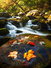Recurrent (Brian Truono Photography) Tags: greatsmokymountainsnationalpark hdr highdynamicrange middlepronglittleriver nps nationalpark nationalparkservice smokymountains tennessee tremont autumn cascade color fall falls flow geology green landscape leaf leaves longexposure moss motion mountains natural nature orange prong red river rock rocks stone stream travel trees valley water waterfall yellow