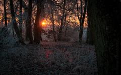 sunrise in a frozen forest (Florian Grundstein) Tags: sunset sunrise morning sun trees silhouette picoftheday clouds sky landscape natural beautifullight nikon fx fullframe upperpalatinate bavaria teublitz saltendorf