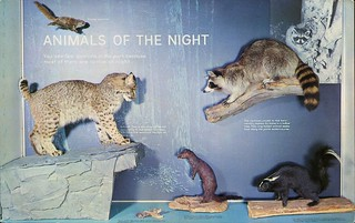 Animals Of The Night Exhibit, Sugarlands Visitor Center, Gatlinburg, Tennessee
