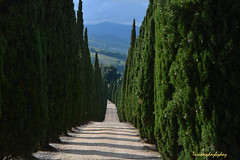 10_road (TuscanyDayByDay) Tags: tuscany road cypress podere