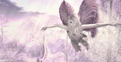 Il semblerait que les anges me soutiennent ♥ (Petite Chouky) Tags: petou blueberry angelberry angel pink anges fly sl chouky second life mesh bento