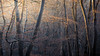 Epping Forest 29/12/2016 (Matthew Dartford) Tags: bokeh epping eppingforest forest glow light orangeandblue sunrise sunset tree treeline trees woodland