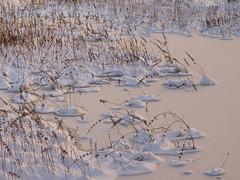 Foxboro Cranberry Bogs 2 (dennisgg2002) Tags: foxboro massachusetts ma cranberry bogs winter new england snow landscapes