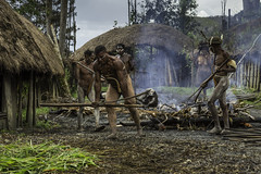 Preparing an earth oven (elebe.foto) Tags: pigfestival westpapua indonesia indonesien dani natives baliemvalley earthoven