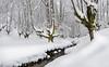 TRAJE DE ETIQUETA (Juanjo Vélez de Elburgo) Tags: basquecountry paísvasco forest bosque bizkaia vizcaya otzarreta morning mañana sunrise amanecer nature naturaleza river río arroyozubizabala winter invierno mystical místico tranquility tranquilidad nieve snow fagussylvatica hayedo haya hayedodeotzarreta bw77mmxsprodigitalhtcpolksmmrcnano tokina1116mmf28atxprodxii nikond7000