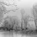 L'Ernée (martine_ferron) Tags: lernée mayenne rivière arbres givre hiver pont