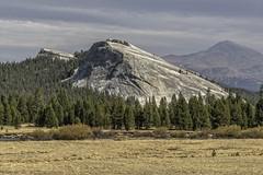 D8E7261-Lembert-Dome-Yosemite-NP (1st Evergreen) Tags: lembertdome granite granitedome glaciation tiogapassroad yosemitenationalpark sierras california evergreentrees tuolumnemeadows tuolumneriver