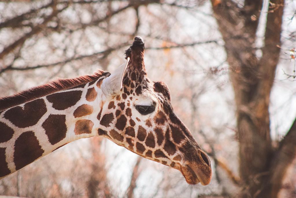 zoo aarhus tunge patter