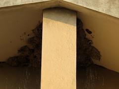 IMG_7234 (mohandep) Tags: birding nests valleyschoolbangalorekarnatakawildlifenature