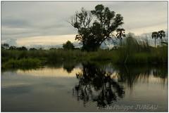DSC08677PJ_XNV (http://phj.bookfoto.com/) Tags: botswana afrique okavango philippe jubeau delta
