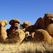 DSC08815 - NAMIBIA 2013