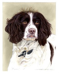 """Hayley - Bexie Spanial portrait • <a style=""""font-size:0.8em;"""" href=""""http://www.flickr.com/photos/64357681@N04/32838316612/"""" target=""""_blank"""">View on Flickr</a>"""