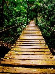 atraccin por el otro lado (wakalani) Tags: bridge naturaleza verde green nature forest puente olympus panama vistas gamboa zona puentecolgante hangingbridge canalzone olympusfe120 zonadelcanal wakalani parquesoberania masvistas utatafeature