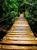 atracción por el otro lado (wakalani) Tags: bridge naturaleza verde green nature forest puente olympus panama vistas gamboa zona puentecolgante hangingbridge canalzone olympusfe120 zonadelcanal wakalani parquesoberania masvistas utatafeature