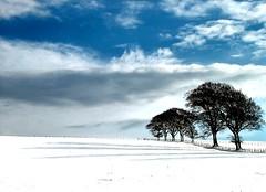 Trees Snow and Shadows (ccgd) Tags: blue snow tree scotla