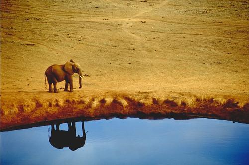 Tsavo Reflection.jpg