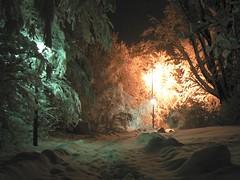 The Entrance to Narnia - by CottonIJoe