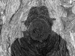 self-portrait in shadow and wood (I, Puzzled) Tags: wood shadow blackandwhite bw 15fav santacruz selfportrait tree hat march 2006 knot stump ipuzzled themeoftheweek 200603 20060309 20060309172