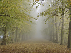Misty avenue (net_efekt) Tags: uk autumn trees winter wallpaper england mist holiday color colour tree green art nature colors leaves misty fog landscape photography landscapes still cool haze woods colours natural forrest walk foggy fresh cables oxford avenue popular wald bltter farbe bume hue foret shady tone mute oxfordshire tranquil moist wheatfields wheatley treelined shotover landstrase naturesfinest 15000views supershot naturelandscapes 200favs golddragon impressedbeauty shadded photographyforest