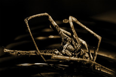 Expiration (tarotastic) Tags: macro deleteme3 spider savedbythedeletemegroup bestviewedlarge saveme10
