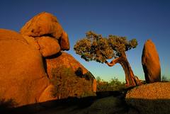 Joshua Tree National Park (Dietmar Temps) Tags: california cactus tree america nationalpark bravo rocks desert joshuatree f1 creativecommons northamerica rockymountains specland bluelist frhwofavs bachspicsgallery