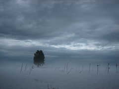 lonesome tree (oliworx) Tags: sky snow tree topv111 misty fog clouds 510fav germany bavaria 2006 topv222 creativecommons topv50 topv100 topv200 sauerlach cotcmostinteresting 200603 oliworx