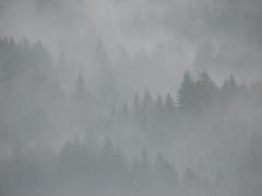 Mystic (Walter Quirtmair) Tags: trees fog digital forest austria march haze 2006 swq takenbywalter gosau powershots2is specland