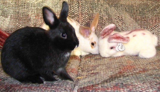 One of these rabbits isn't real - eBunny & Ifurry