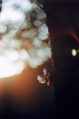 #02 basking in the setting sun (moaan) Tags: life 50mm dof bokeh 2006 f10 noctilux zeissikon kodak100uc explored inlife gettyimagesjapanq1 gettyimagesjapanq2