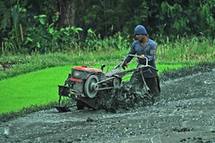 Advancing... hard work ahead! (bocavermelha-l.b.) Tags: ploughing arando south–china–sea inindonesia riceterracesinbali jatiluwihricepaddy