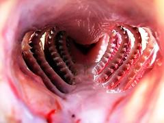 87 Inside (geos_) Tags: lake fish macro nature closeup big inside continuum 4aces thecontinuum specnature experience9