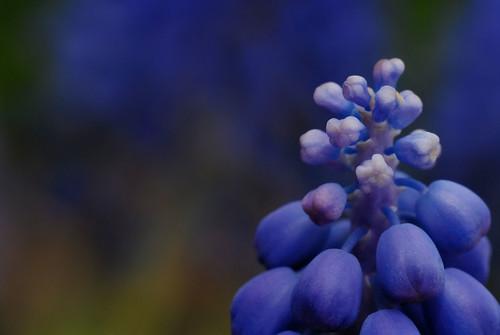 love purple color blurple