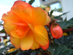 DSCF0568 (P.J. McNair) Tags: flowers honeymoon prettypetals