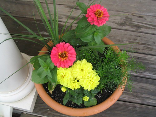 Potted flowers by Mark.Pilgrim.