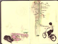 Untitled-3 (the3robbers) Tags: flowers boy moleskine bike shoe system transfer visual neuron references solvent fairburn the3robbers